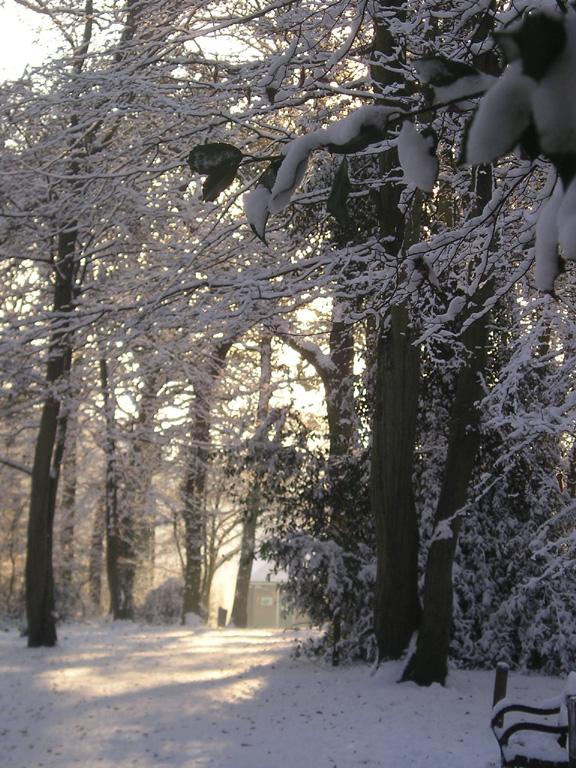 Woodssun